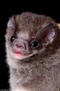 Bat Exceptionalism: Prepare to Be in Awe of Bats