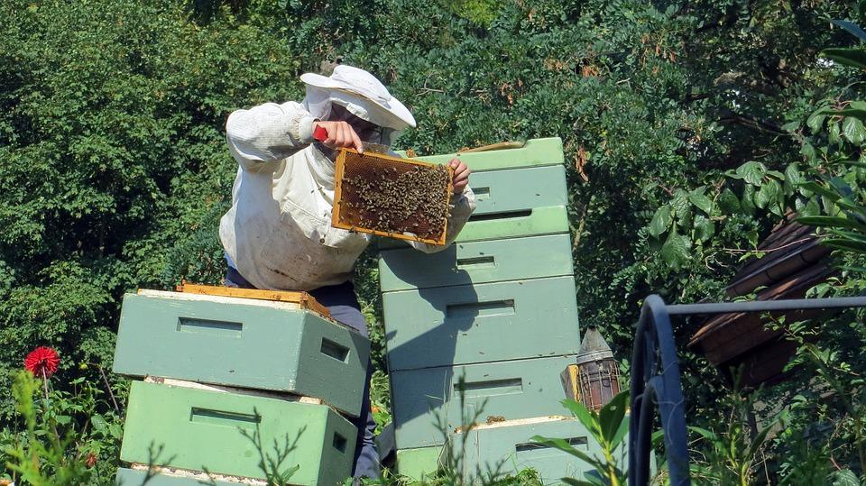 beekeeper-941689_960_720