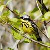 Bonus Audubon Event! Thursday, March 22, 7:00 pm